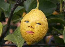 lemon123